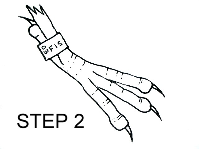 Birds foot step 2