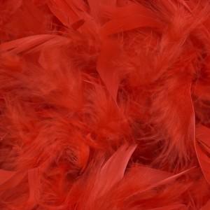 Carophyll Red shop